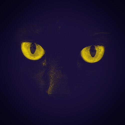 A black cat's eyes for the Halloween 2020 spooky season special